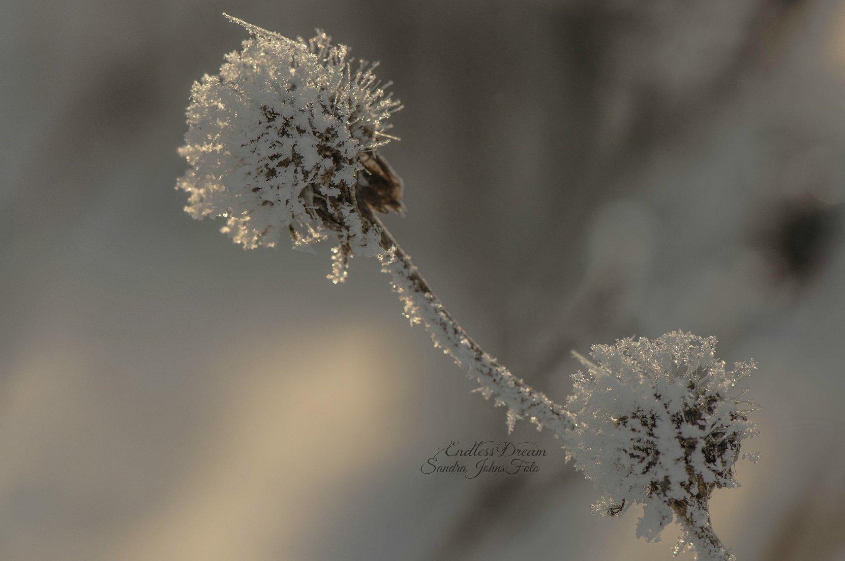 Fleur_neige_SJ